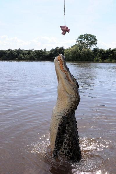 crocs alive