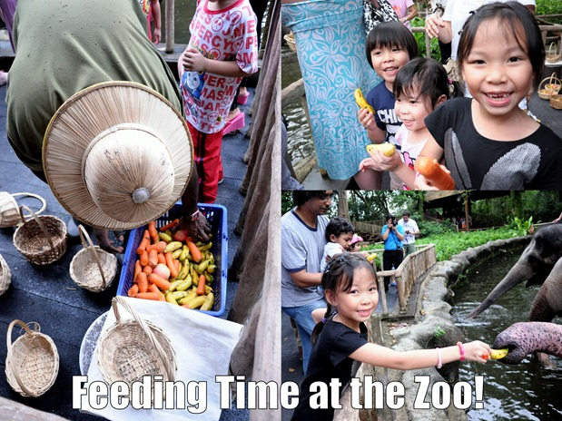 feeding time at zoo