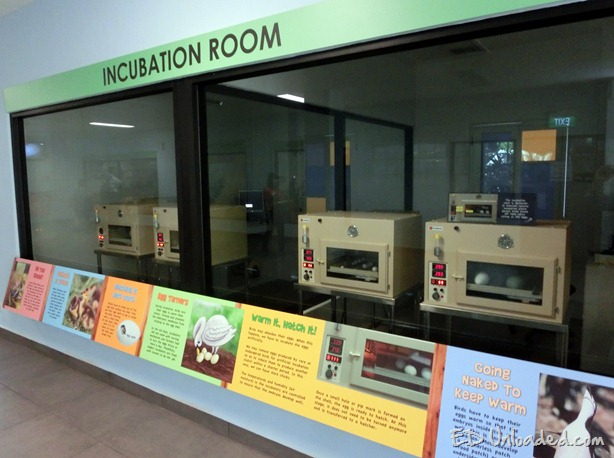 incubation room