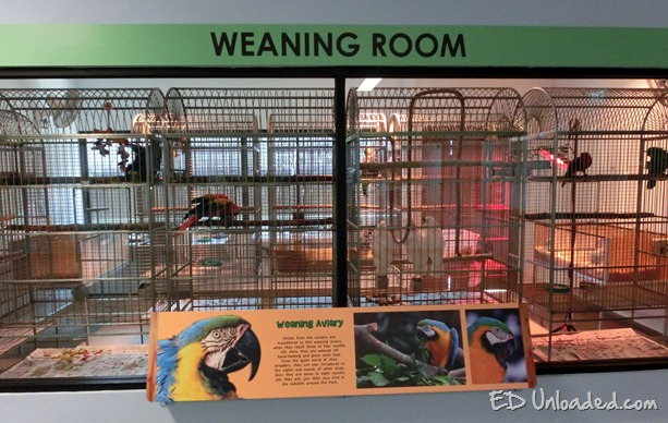 weaning room