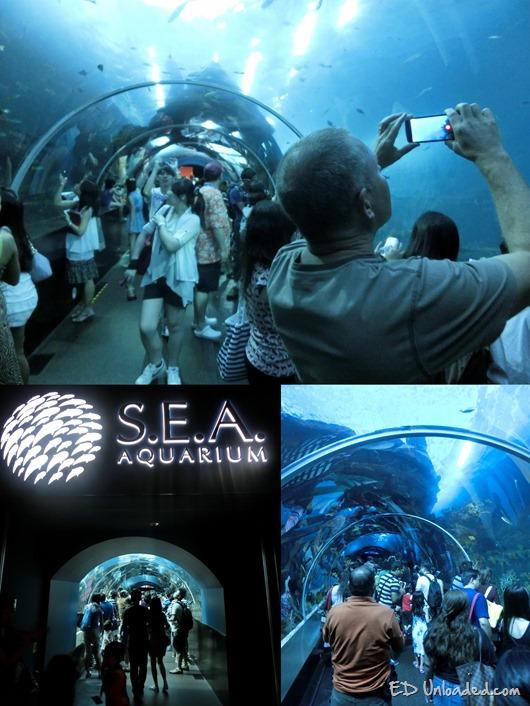 Sentosa Aquarium