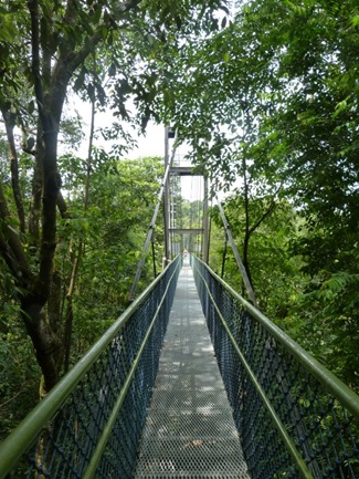 treetop bridge
