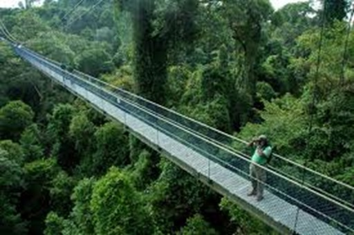 treetop walk thumb Top 5 places to bring your kids in Singapore