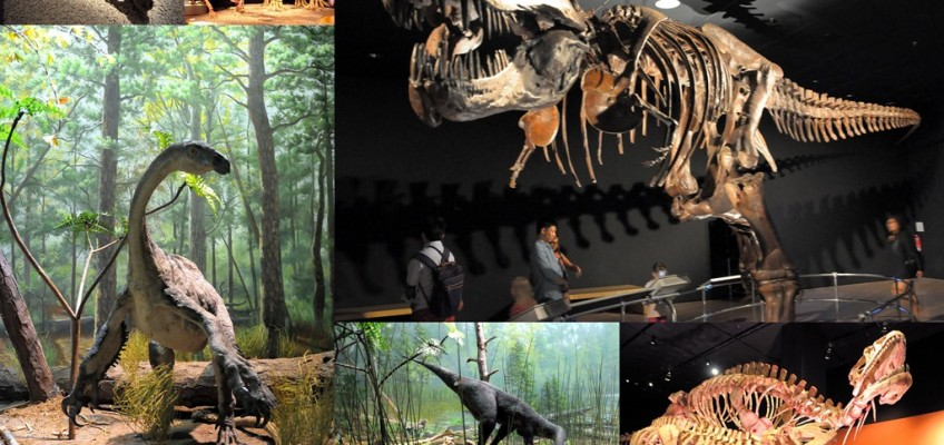 an in depth look at dinosaurs and their extinction Why did mammals survive when dinosaurs perished  the mass extinction that struck at the end of the cretaceous was one of the  how long can a person hold their.