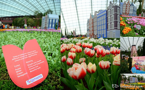 tulip collage thumb Tulips at Gardens by the Bay