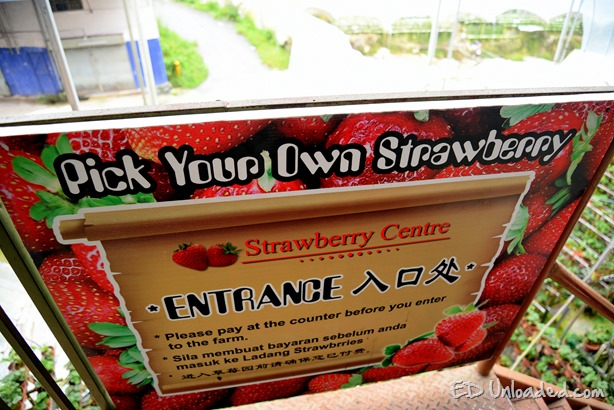 strawberry centre