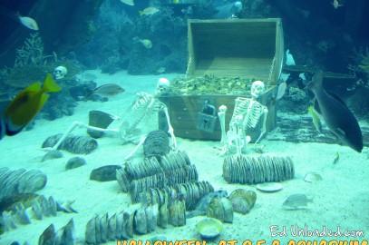 Guided Tours S.E.A. Aquarium