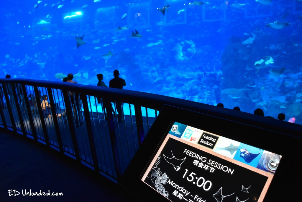 feeding time aquarium
