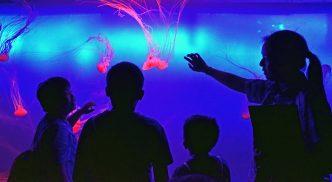 jellyfish singapore-1