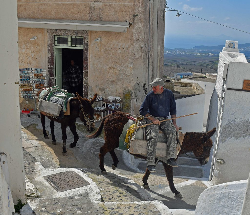 donkey greece